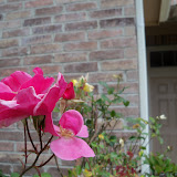Gardening 2013 - 115_5721.JPG