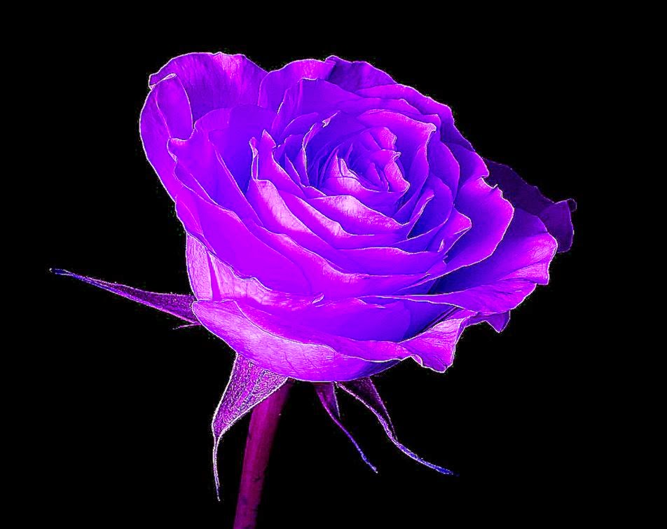 All About HD Wallpaper: Cool Purple