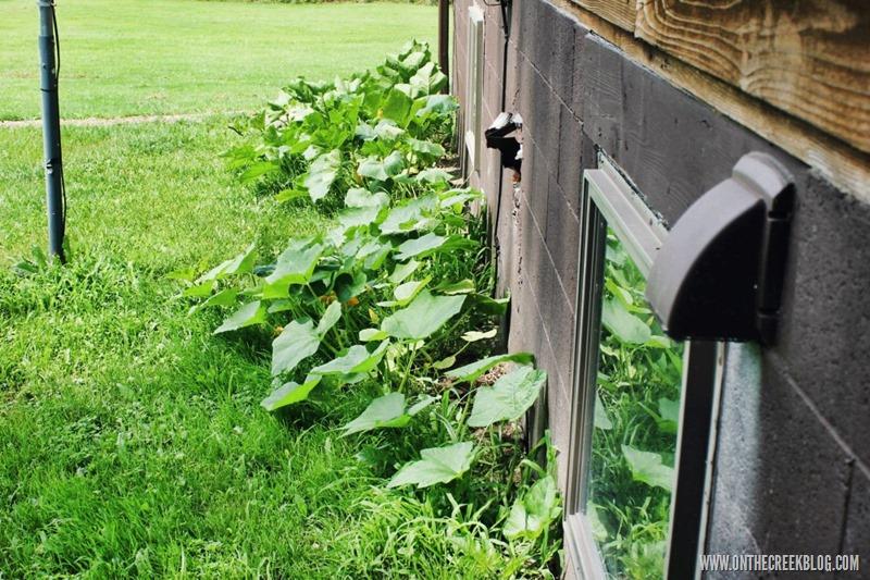 An unexpected pumpkin patch | On The Creek Blog // www.onthecreekblog.com