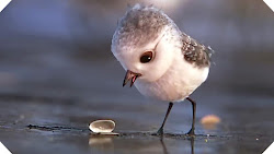 Piper - Chú Chim Trên Bờ Biển