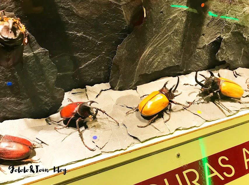 insectpark-centro-naturaleza-madrid-insectos-escarabajos-colores-niños