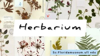 materi herbarium