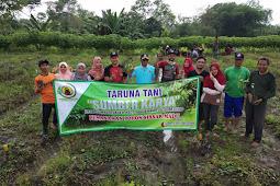 Pelopor Pertanian Desa,  Taruna Tani Sumber Karya Tanam  Pohon Buah Sirsak Madu
