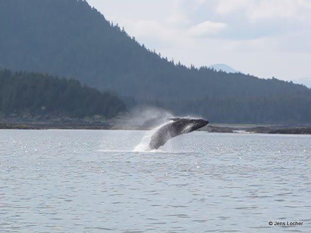 2009 - Whale.jpg