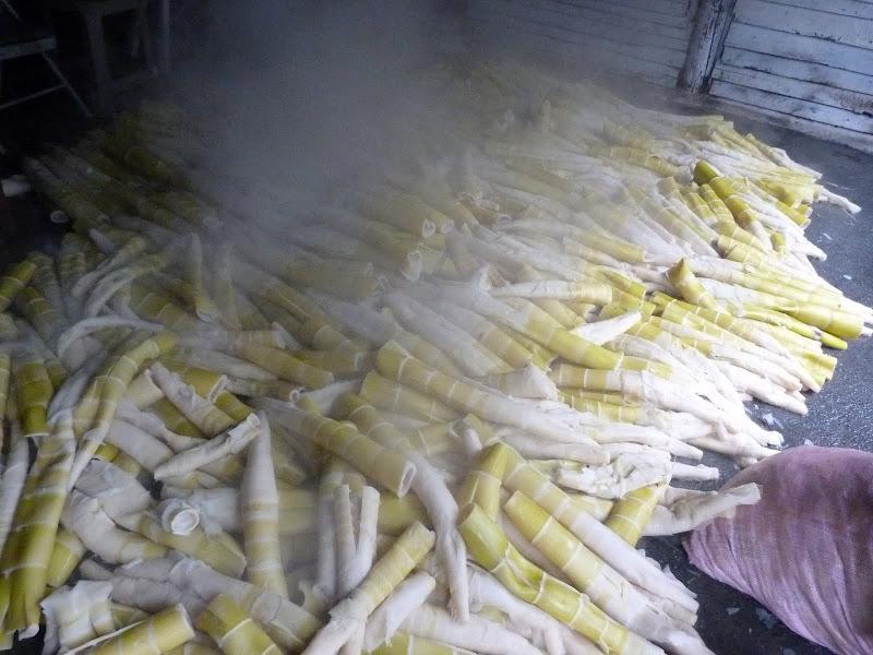 Chance d arriver au moment de la cuisson des pousses de bambous