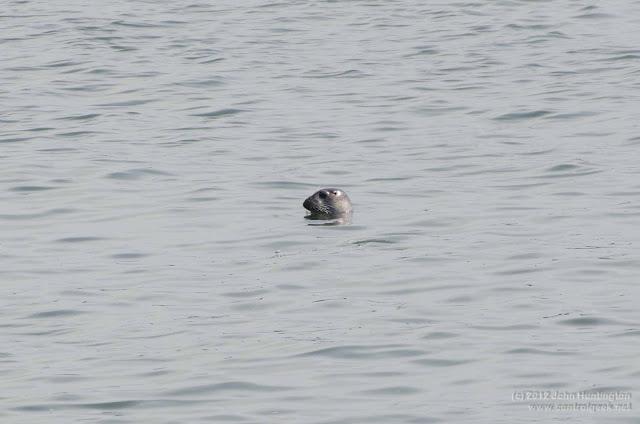 more seals in new york harbor  u2014 control geek