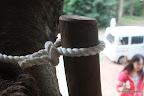 木に釘を打たないようにした結果、木製の手すりが入らない箇所にはロープの手すり。