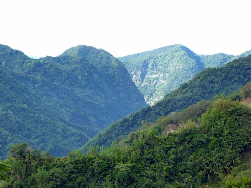 TAIWAN  Dans la region d ALISHAN - P1130858.JPG