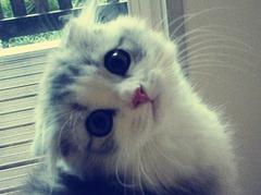 Cute=Cat01 (4)