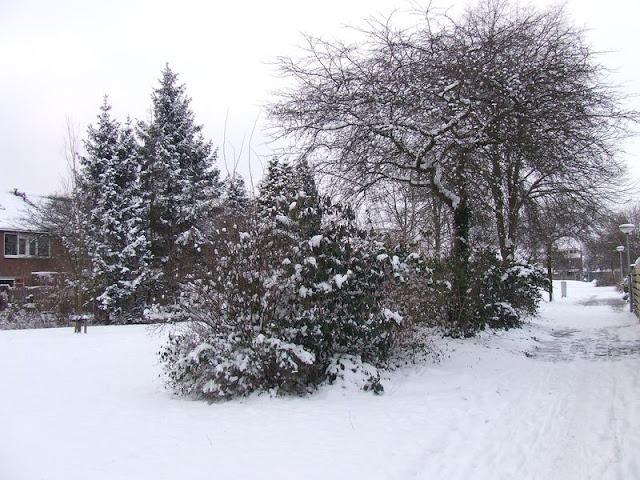 Winterkiekjes Servicetv - Ingezonden%2Bwinterfoto%2527s%2B2011-2012_71.jpg