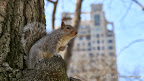 Central Park - Naturoase mitten in NY