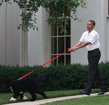 [getty+bo+the+dog%5B5%5D]