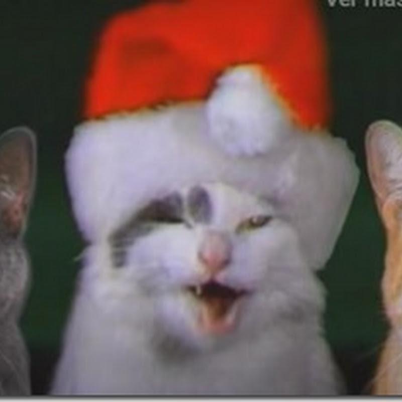 Videos perros y gatos cantando un villancico