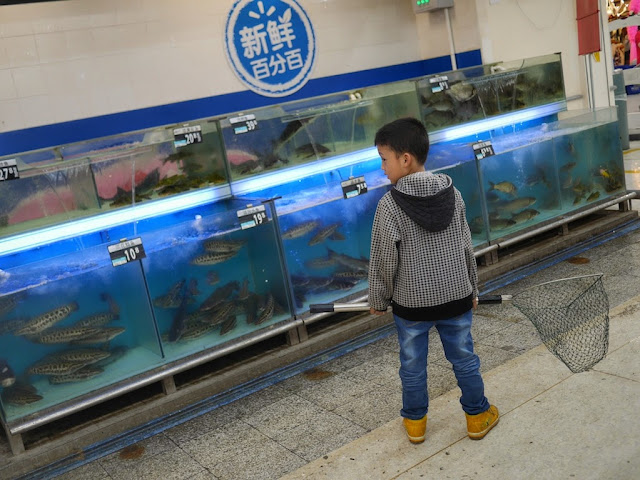 boy holding a fishnet in front of tanks of fish