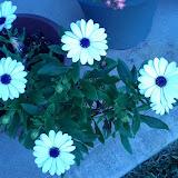 Gardening 2013 - IMG_20130318_162952.jpg