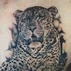 Leopard #2