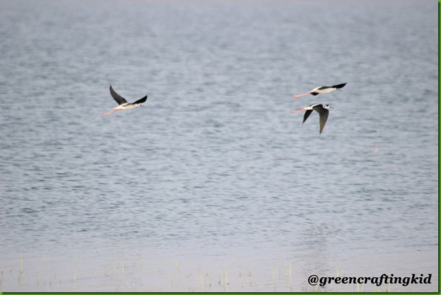 Stilts in flight