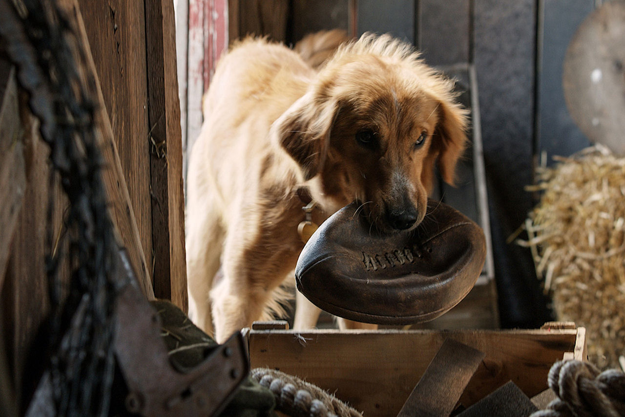 A DOG'S PURPOSE. (Photo courtesy of Universal Pictures).
