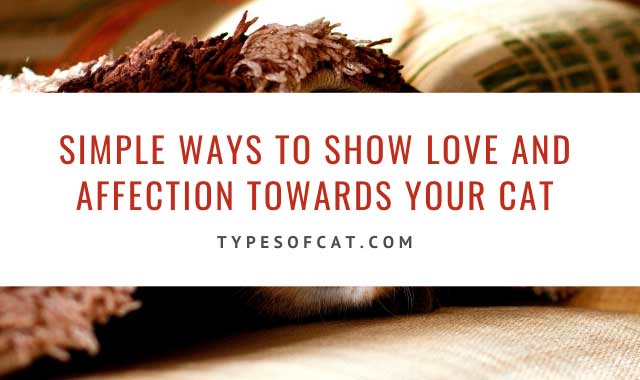Simple ways to show love and affection towards your cat