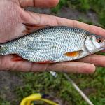20140603_Fishing_BasivKut_006.jpg