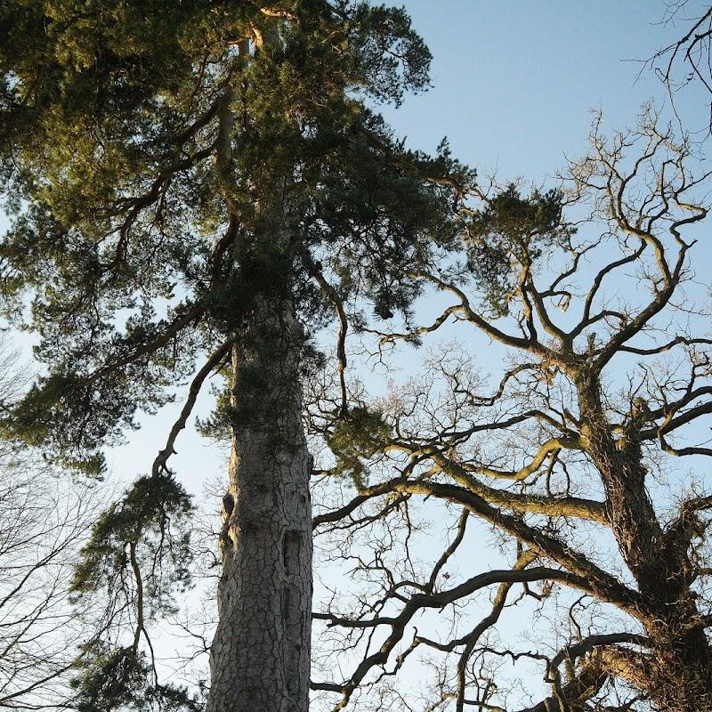 Stowe_Trees_25.JPG
