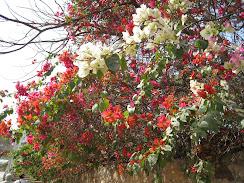 Varsana flowers :)
