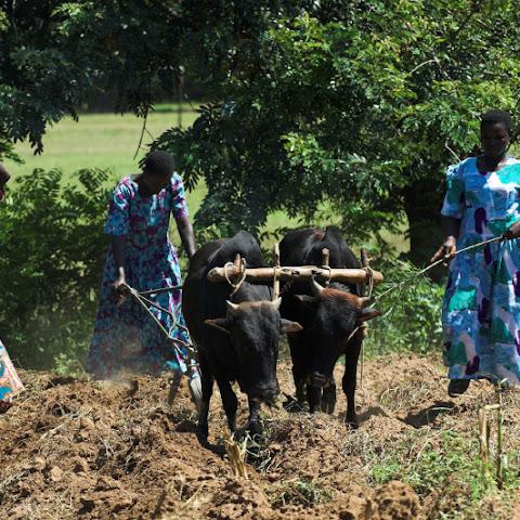 On working farm
