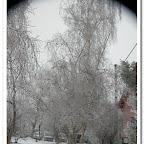 erdő, zúzmara 003.jpg