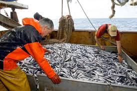 Plus de poissons algériens dans quatre ans?