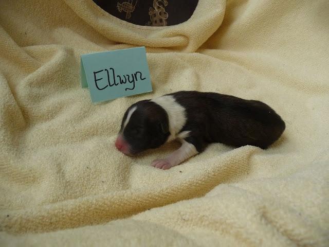 Ellwyn
