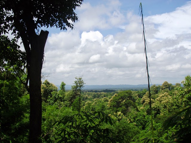 A view from a hill-top at Rajkandi Reserve Forest