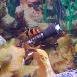 Fish - 116_0195.JPG