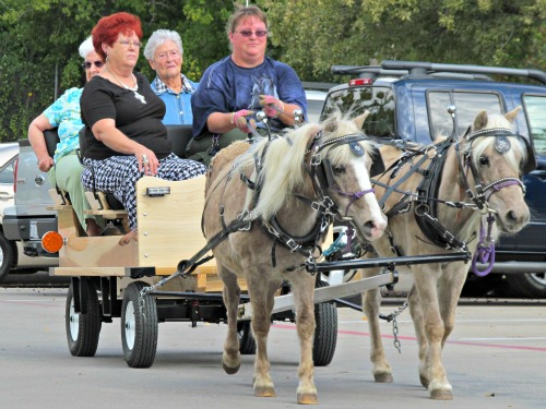 Bell and Bit pull new wagon in TX