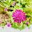 Lloyd's Gardens of London Ltd's profile photo