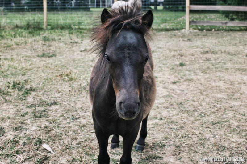 Sergio the baby pony