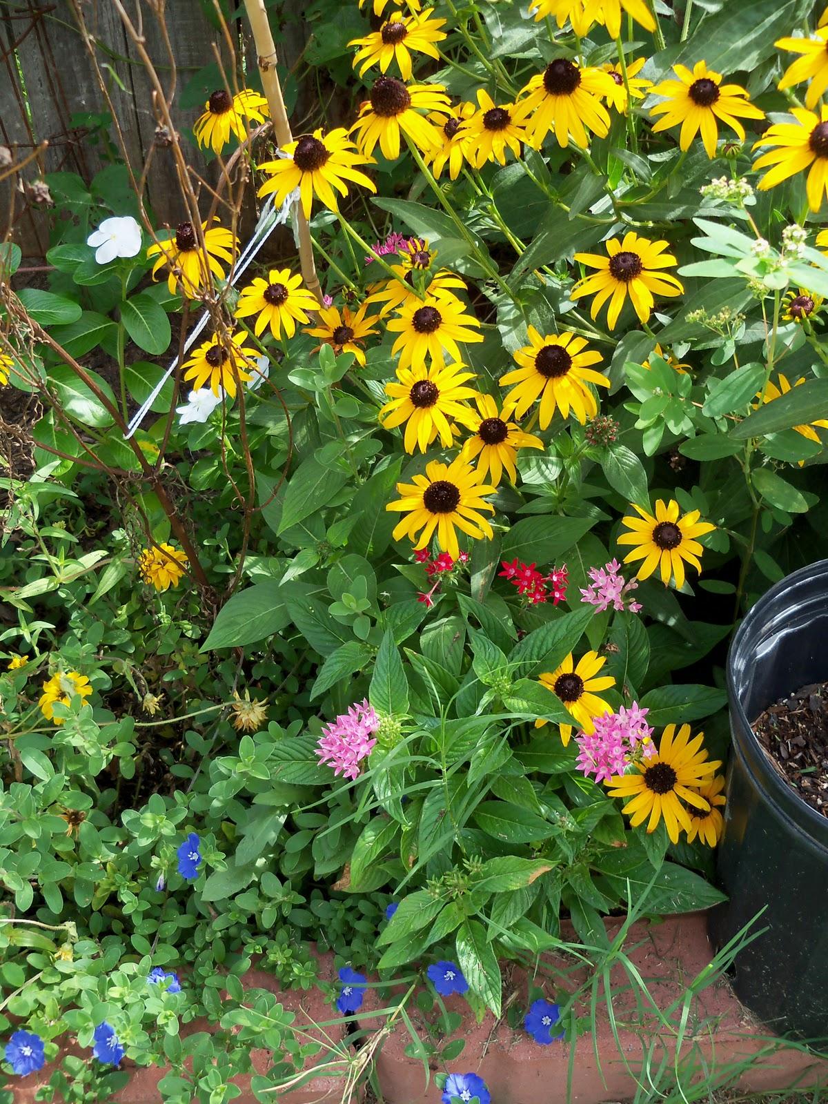 Gardening 2010, Part Three - 101_5201.JPG
