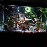 Fish - IMG_20121002_215816.jpg