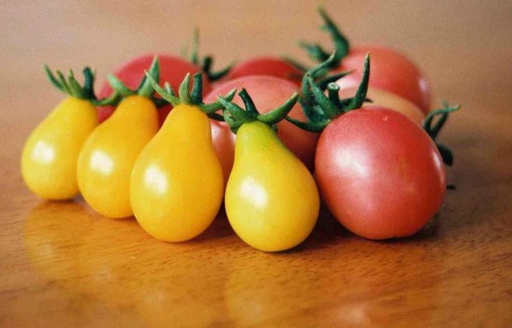 Cà chua bi hình trái lê gây sốt tại Việt Nam - 55c961bfc1bf3