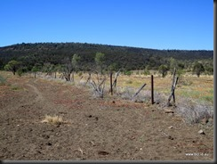 180508 081 Dingo Fence Near Hughenden