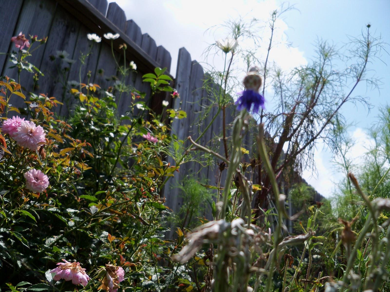 Gardening 2010, Part Three - 101_5081.JPG