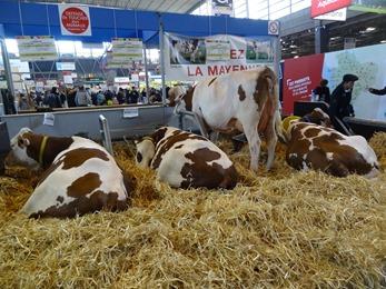 2018.02.25-041 Hexode vache montbéliarde