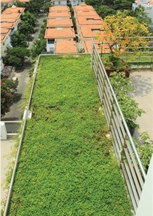 Trồng cây trên mái, một giải pháp hữu hiệu chống nóng, chống thấm, tăng mảng xanh đáng kể cho không gian đô thị.