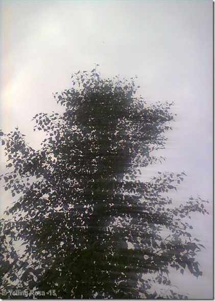 001 Puu E000