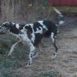 Cheyenne @ 2 years on 11/3/2012