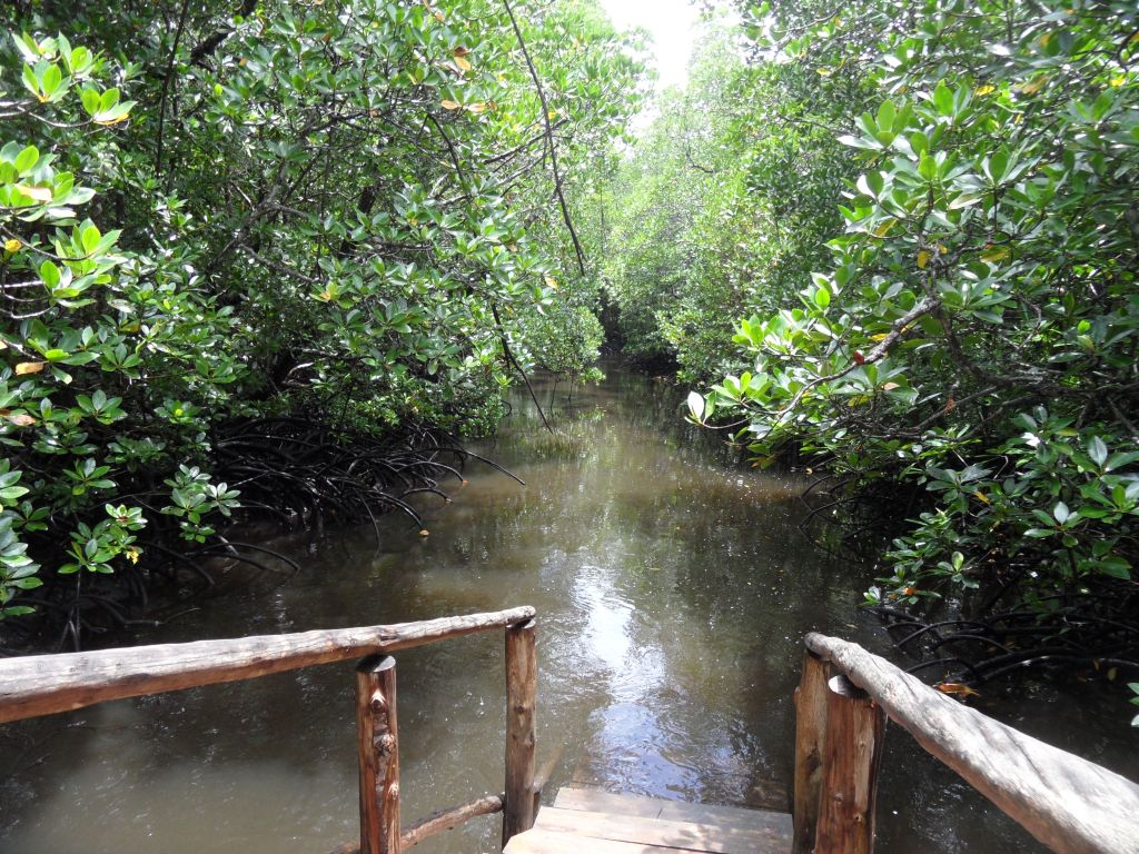 Jozani (Subasar) ormanından