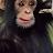 Star Rollins avatar image