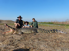 This 13 foot crocodile taken at Carmor Plains had become quite a nuisance, taking cattle from the small water hole behind. Look how fat he is!