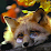Theo Fox's profile photo