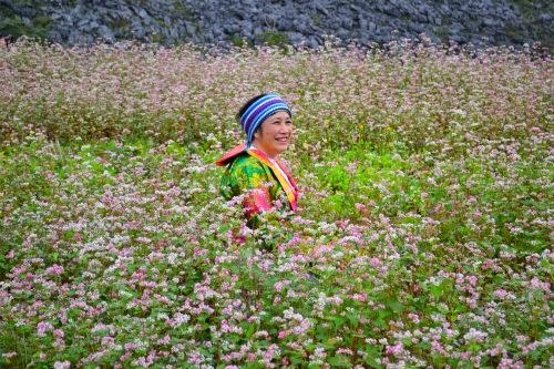 Mùa hoa tam giác mạch lại về trên núi đá hà Giang
