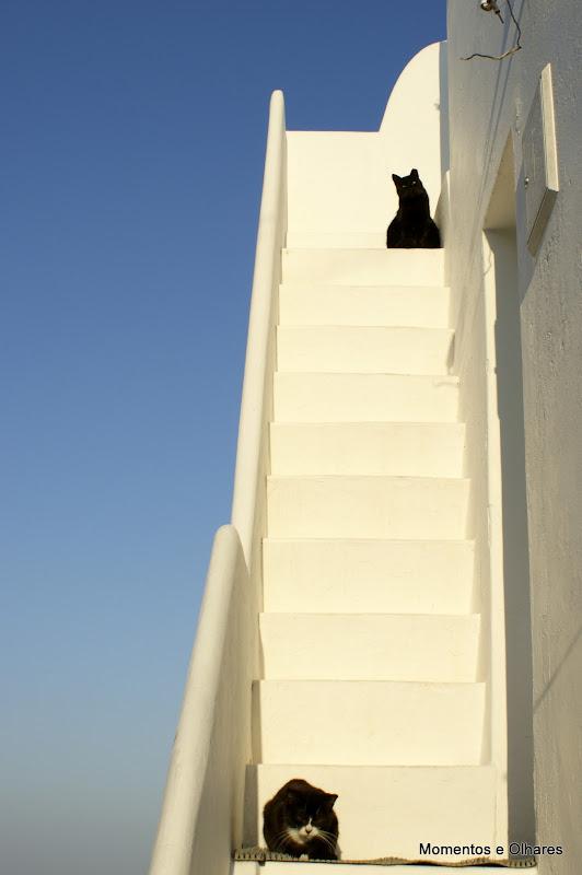 Gatos a apanhar Sol
